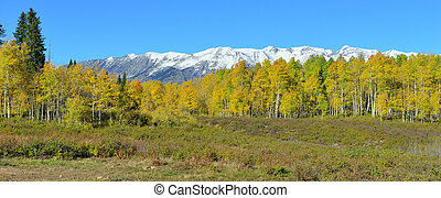 panoramic view of the alpine scenery of yellow and green aspen and snow covered mountains during foliage season