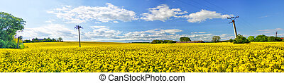 Panoramic view of the oil-seed rape field