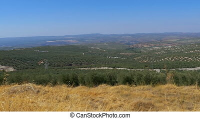 Panoramic view of the Olive Fields in the Desert of Spain