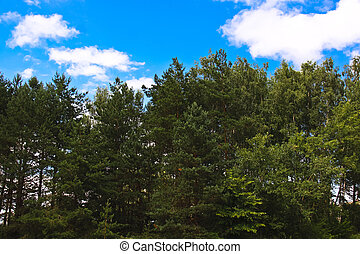 panoramic view of the russian forest in cloudy day