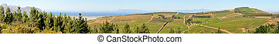 Panoramic view of vineyards near Sir Lowreys Pass