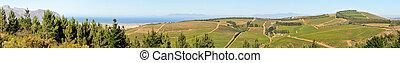 Panoramic view of vineyards near Sir Lowreys Pass