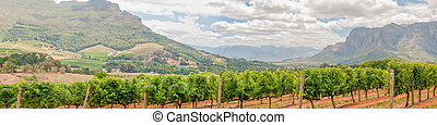 Panoramic view of vineyards near Stellenbosch