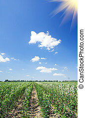 Panoramic view of young apple orchard and blue sky