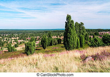 panoramic view on Lueneburg Heath on a summer day