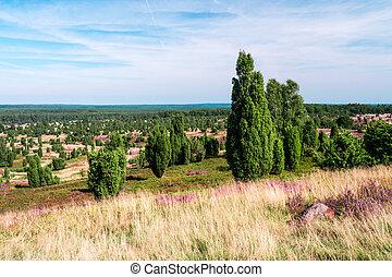 Lueneburg Heath - panoramic view on Lueneburg Heath on a...