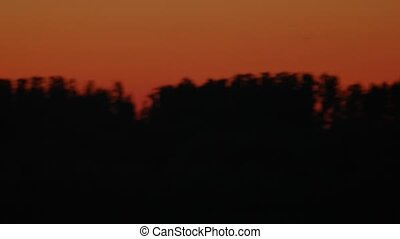 Panoramic view over tree tops at nightfall time