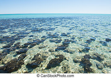 Panoramic View Stromatolites Hamelin Pool Australia
