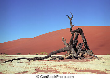 Namib desert - Panoramic view to Namib desert with died tree