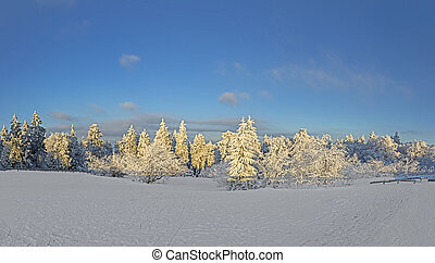 panoramic winter landscape at Feldberg in snow