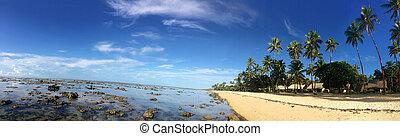 panoramico, paesaggio, di, il, corallo, costa, figi