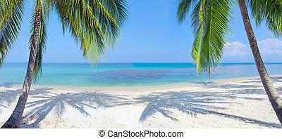 panoramico, spiaggia tropicale, con, palma noce cocco
