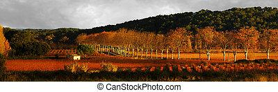 panoramico, vigne