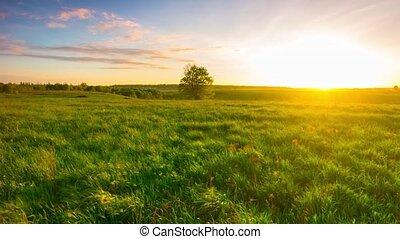 panoramique, champ, coucher soleil, vert