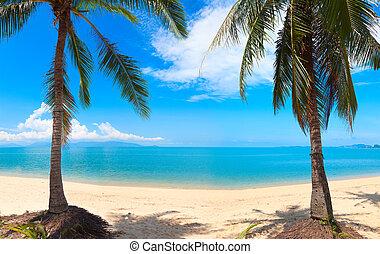 panoramisch, tropischer strand, mit, kokosnuss, palm., koh samui, thailand, knall, po, sandstrand