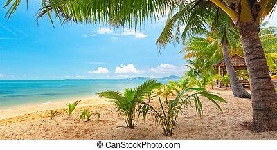 panoramisch, tropischer strand, mit, kokosnuss, palm., koh samui, thailand, maenam, sandstrand