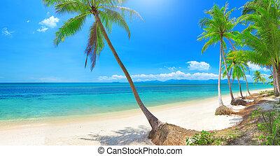 panoramisch, tropischer strand, mit, kokospalme