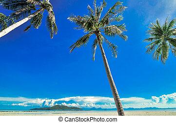 panoramisch, tropischer strand, mit, kokospalme, blaues, sky., koh samui