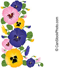 pansies - an illustration of colorful pansy flowers buds and...