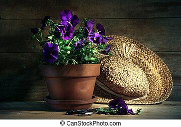 pansies roxos, com, antigas, chapéu palha