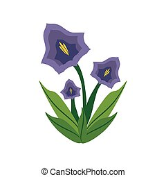 pansy flower spring image