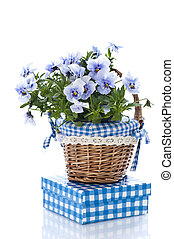Pansy flower with gift box