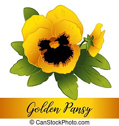 Pansy Flowers, Golden