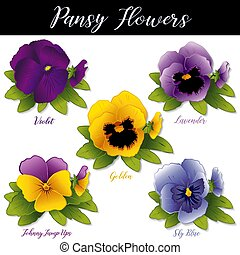 Pansy Flowers, Violet, Lavender, Golden, Sky Blue and Johhny Jump Ups (Violas)
