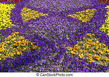 pansy), pansy-mix, (tufted