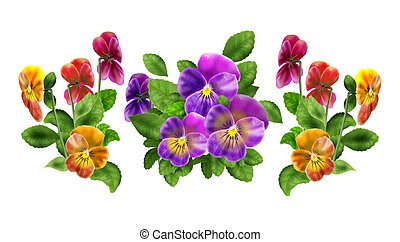 Pansy Viola isolated on white - Pansy floral pattern, three...