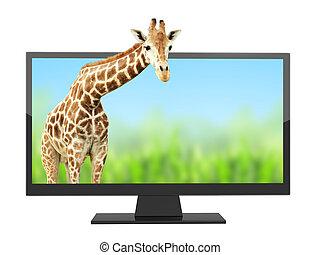 pantalla de tv, moderno, efecto, 3d