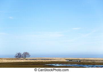 pantano, árboles, cañas