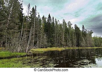 pantano, bosque