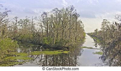 pantano, canales, árboles