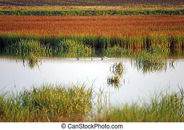 pantano, con, aves, paisaje, otoño, estación