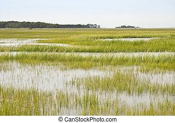 pantano, conservación