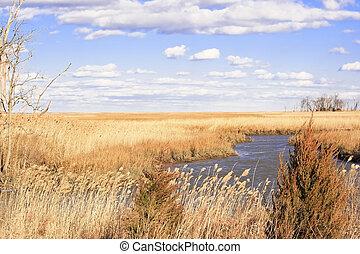 pantano, escena, cerca, delaware, bahía, en, un, frío,...