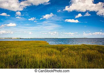 pantano, hierbas, en, el, parque de costa, en, charleston,...