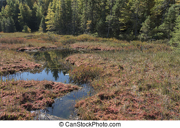 pantano, otoño colora