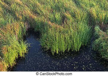 pantano, pasto o césped, paisaje