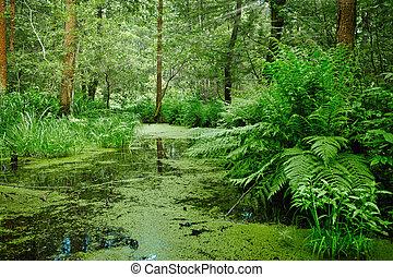 pantano, y, pantano, -, paisaje
