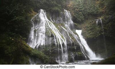 panthère, washington, ruisseau, chutes d'eau