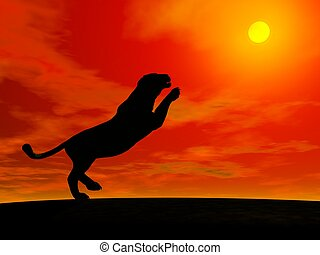 Panther jumping to the sun