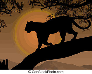 Panther on a tree