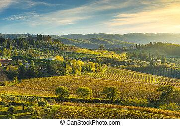 panzano, トスカーナ, ブドウ園, イタリア, パノラマ, sunset., chianti