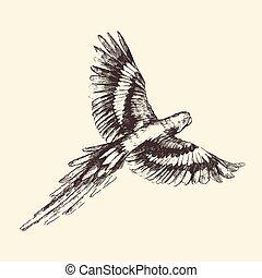 papagai, abbildung, weinlese, hand, gezeichnet, graviert