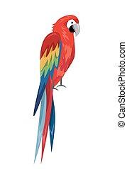 papagai, design, gefärbt, vogel