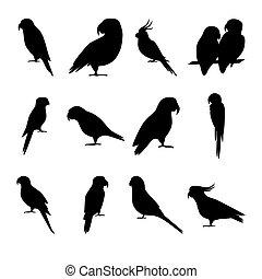 papagai, silhouette, stil, heiligenbilder, satz, wohnung