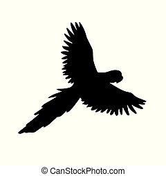 papagai, silhouette, vektor, schwarz, macaw, fliegendes