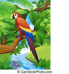 papagai, und, wasserfall